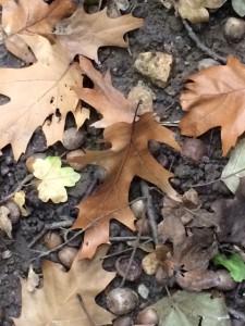 Natur entdecken bei Gehen im Freien