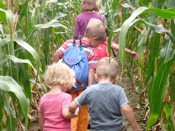 Kindergruppe im Maisfeld Labyrinth