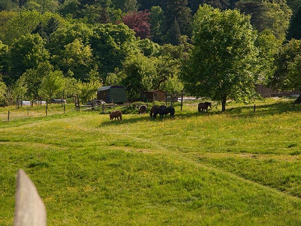 Pferde am Modenbacher Hof